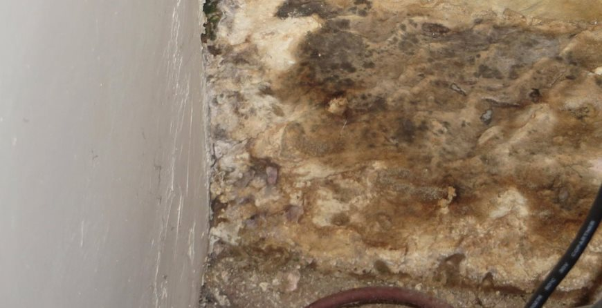 Damp proofing rot