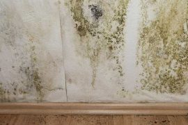 Condensation & Mould Control, Surrey