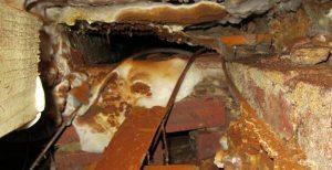 Dry rot