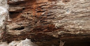 Wet rot wood damage