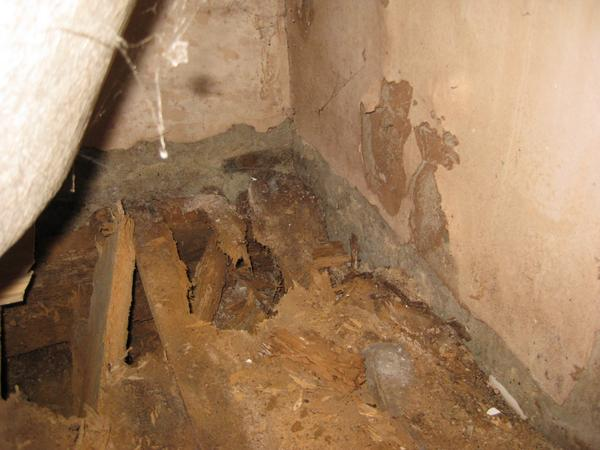 Woodworm Treatment In London Surrey Home Counties