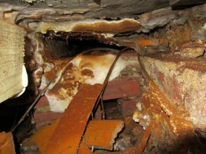 Dry rot attack