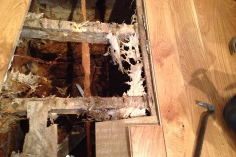 Collapsed floor caused by virulent attack of Dry Rot (Serpula lacrymans)
