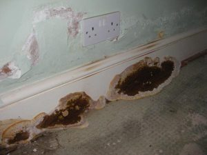 Wall rot on skirting