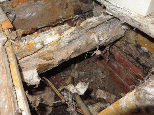 Rotting under floor