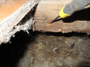 Wet rot floor joists