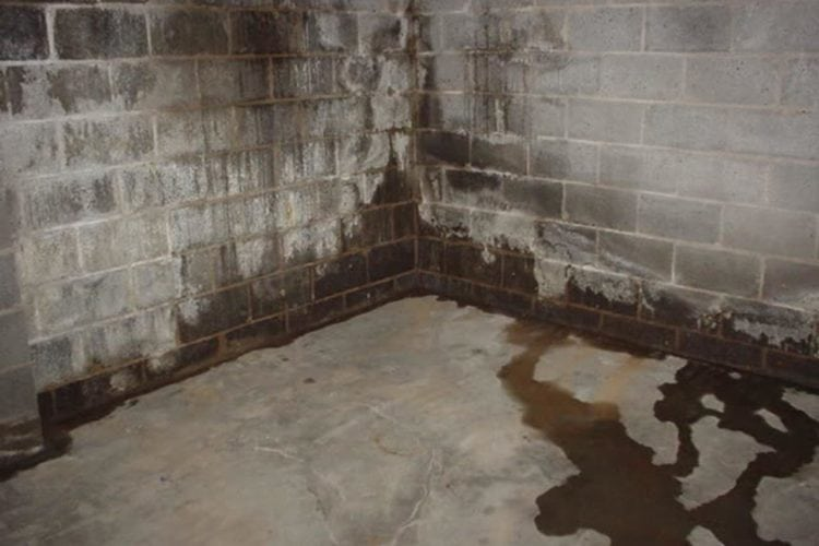 Damp in Basement and Cellars – What to Look Out For