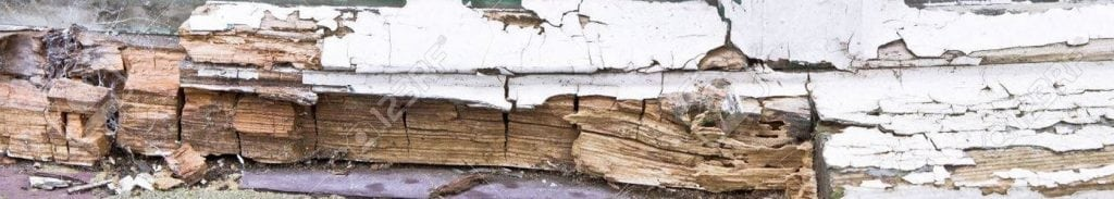 woodworm and wet rot